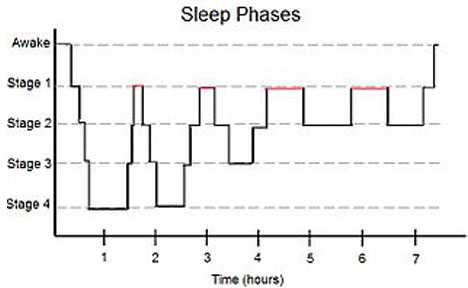 Sleep Cycles – From Wikipedia